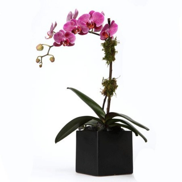 Single pink orchid plant mightylinksfo