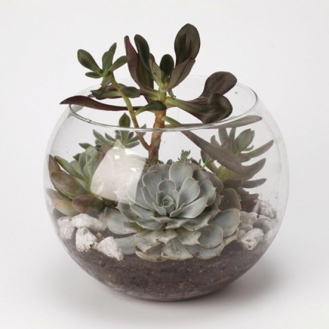 Geometric Terrarium Same Day Nyc Flower Delivery